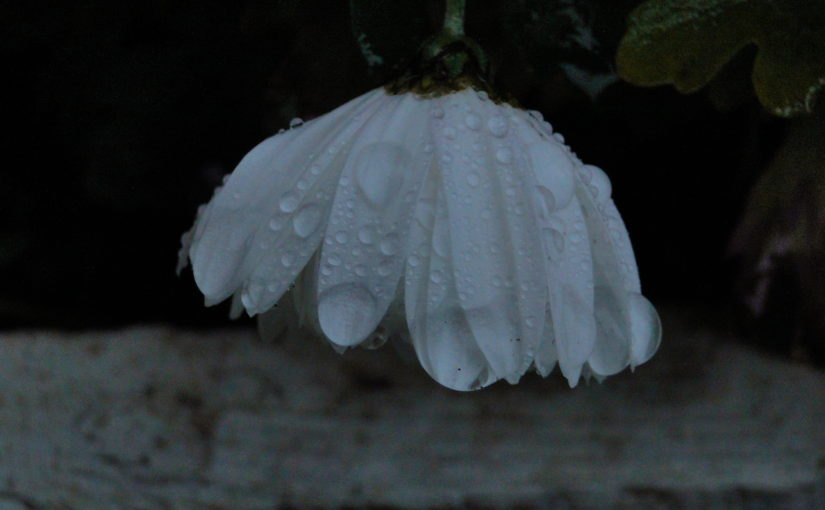 Цвета и цветы нашей осени